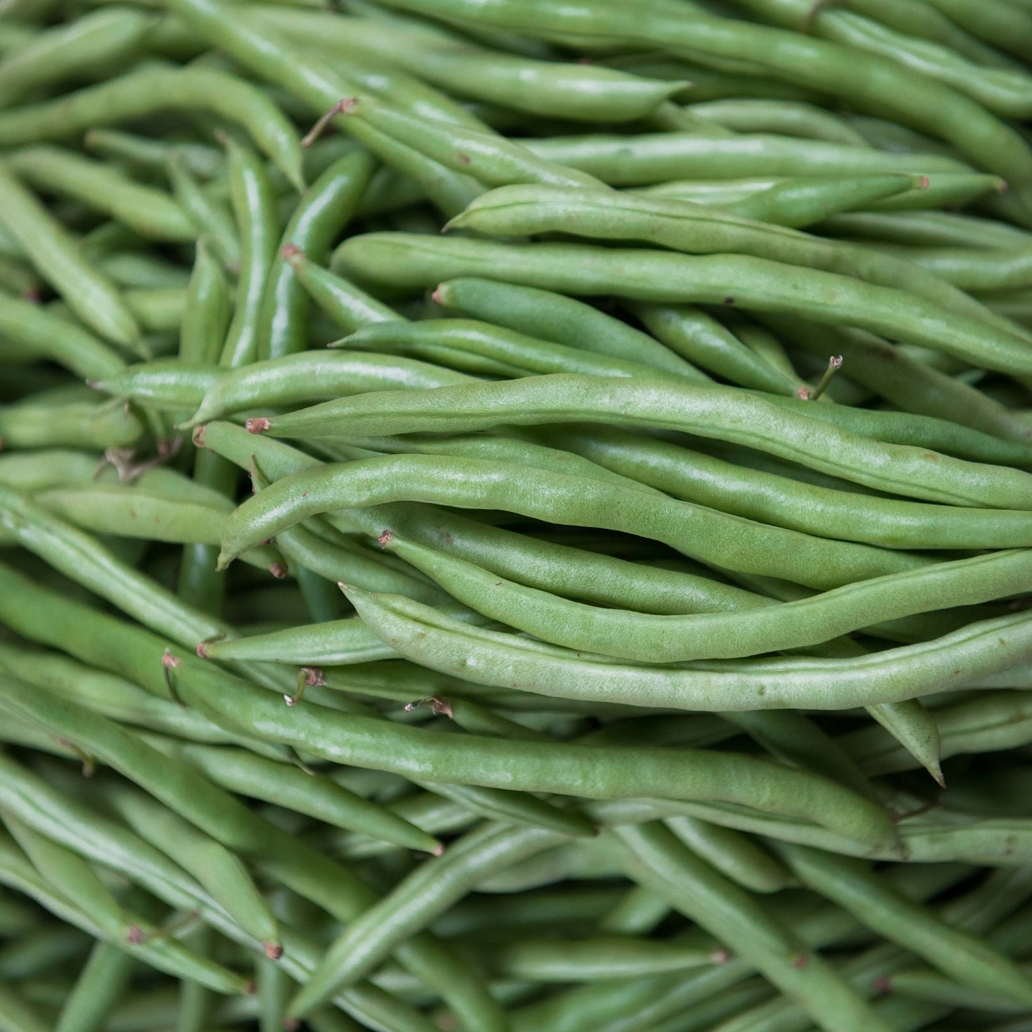 close up of a pile of green beans